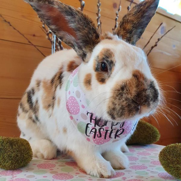 Bandana Hoppy Easter